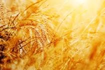 Regione Abruzzo | incentivi per promuovere la qualità dei prodotti agricoli