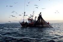 Pesca: nuove misure per favorire innovazione e sostenibilità