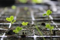 Innovazione in agricoltura: appuntamento a Novel Farm
