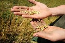 Domanda di disoccupazione agricola: la scadenza e le informazioni per ottenere l'indennità