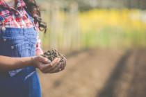 Regione Basilicata: contributi per sostenere le aziende agricole