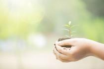 Progetti di ricerca sostenibile: il bando del Ministero dell'Ambiente