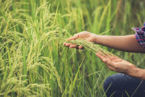 Domande disoccupazione e assegni nuclei familiari per agricoli: novità dall'INPS