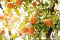 Aziende agricole e fattorie didattiche: misure di sostegno dalla Regione Sicilia