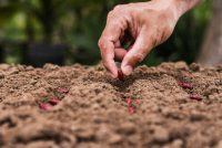 Imprese agroalimentari e innovazione: ecco il bando Siena Food Lab