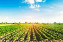Aziende agricole: contributi per le realtà imprenditoriali di Varese